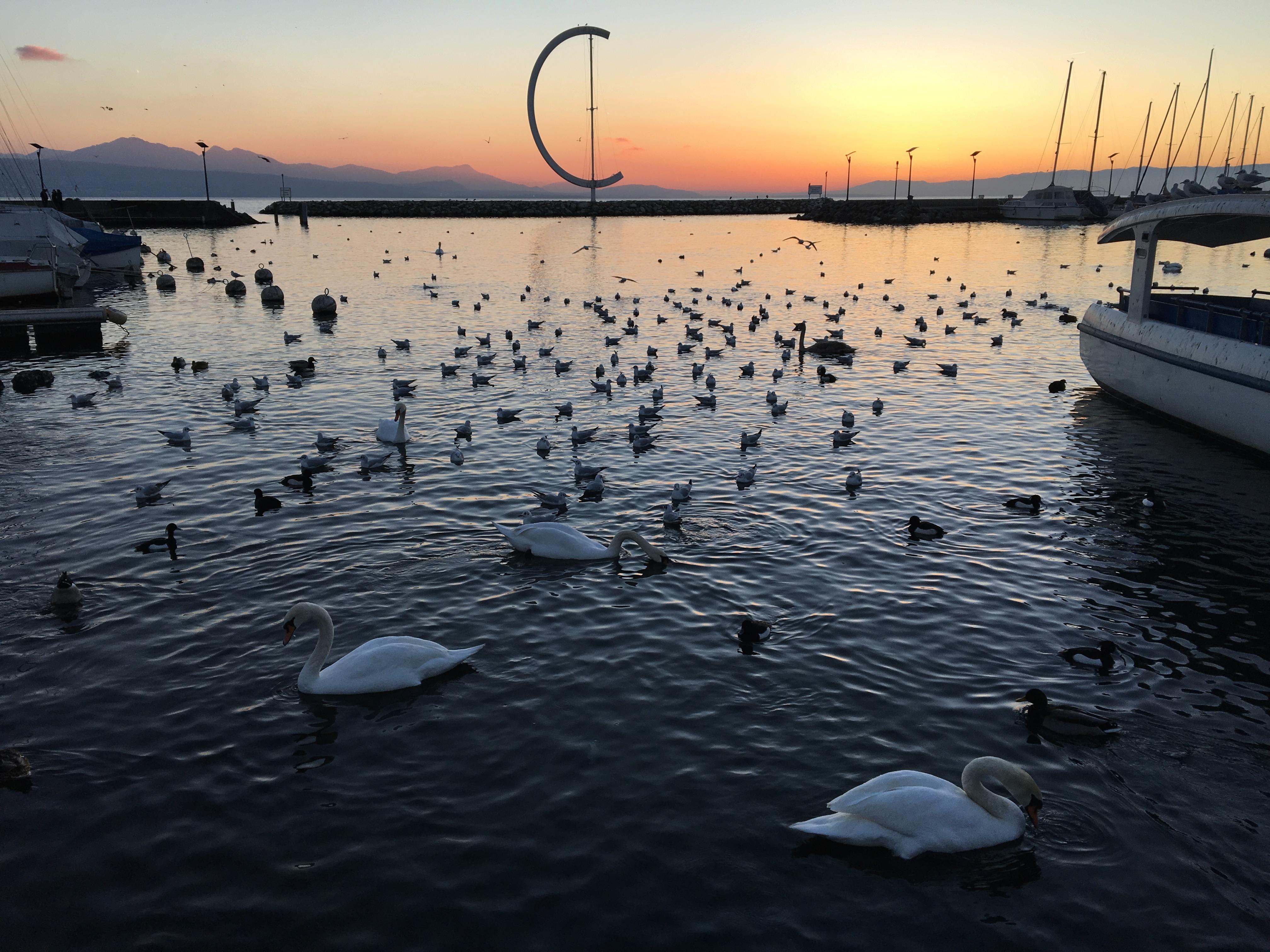 Port lac Léman Lausanne coucher de soleil et oiseaux